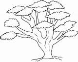 Tree Oak Clipart Clip Coloring Outline Line Forest Drawing Clipartlook Template Bl Sketch Ziyaret Webstockreview Lions sketch template