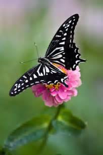 Facts About Butterflies