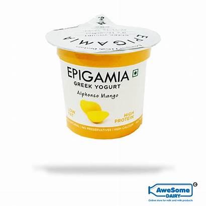 Yogurt Greek Epigamia Mango Alphonso Dairy India