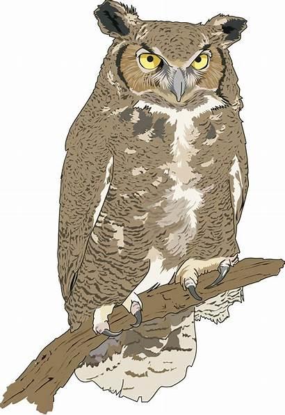 Owl Eagle Clipart Hibou Duc Grand Clipground