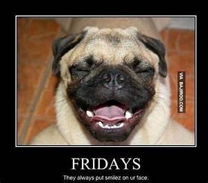funny-dog-face-on-friday-meme_1 - Mum's Lounge