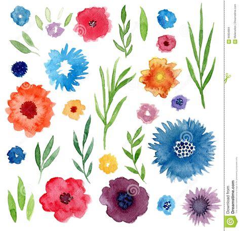 grupo floral da aquarela flores e folhas isoladas para convites casamento decora 231 227 o do