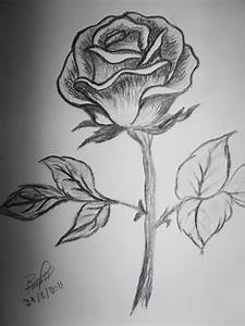 Pictures Of Rose Flowers For Drawing | Wallpaper sportstle
