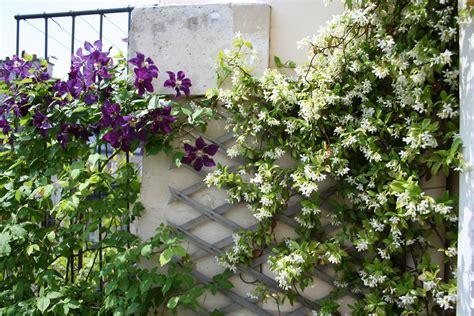 un jardin sur un balcon