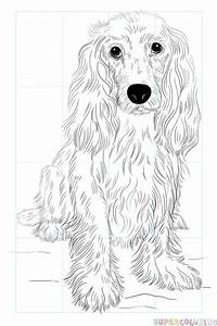 How To Draw A Cocker Spaniel Step By Step Drawing Tutorials