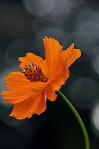 Flower Backgrounds on Pinterest