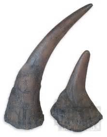 Black Rhino Horn