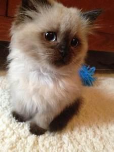 Cute Grumpy Cats | Cuteness Overflow