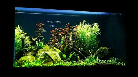 Aquascape Maintenance by Non Co2 Budget Aquascape Maintenance And Update