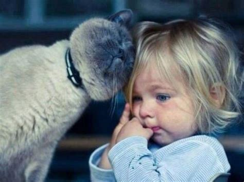 12 Cats That Really Love Their Humans  Animal's Look