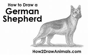 How To Draw A Dog German Shepherd
