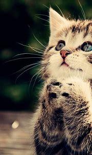 Free download funny cat full hd wallpaper praying kitten ...