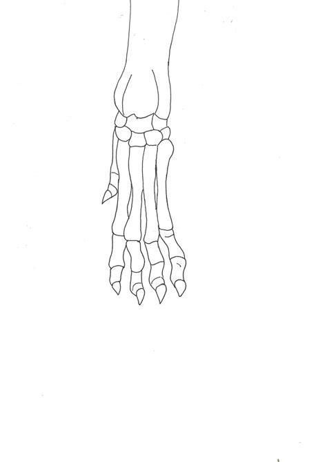 bone  bone comparing animal skeletons