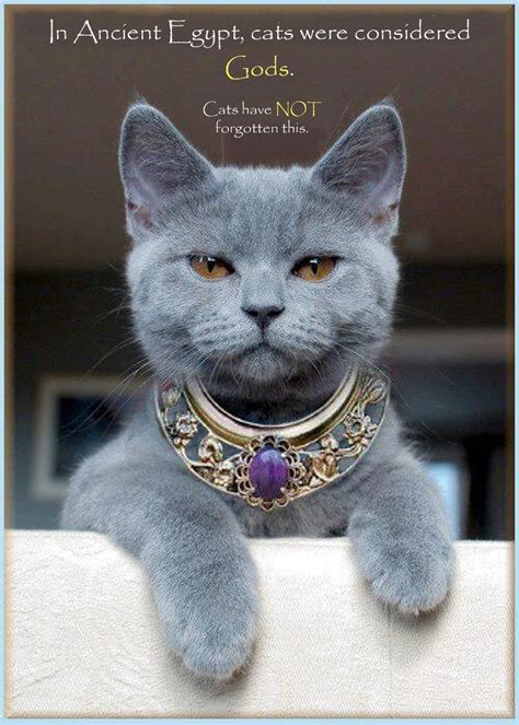 00 in ancient cats were considered gods 06 12