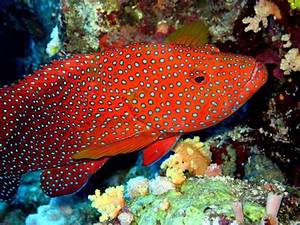 ocean colorful fish images - Google Search | Colorful ...