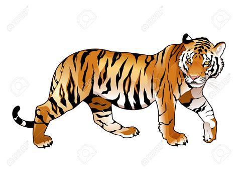 tiger clipart realistic cartoon pencil   color