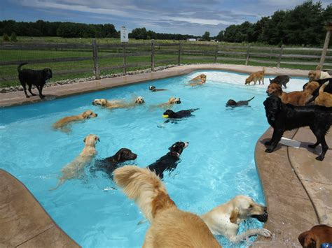 This Is What A 'pool Pawty' At A Dog Daycare Center Looks