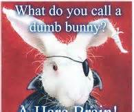 funny easter quotes pictures  images  pics