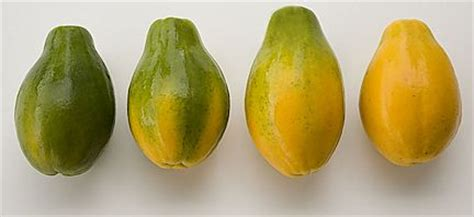 how to tell if a papaya is ripe healthy girl s kitchen papaya and basil salad
