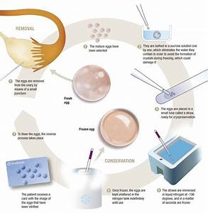 Egg Vitrification How Does It Work How Much Does It Cost