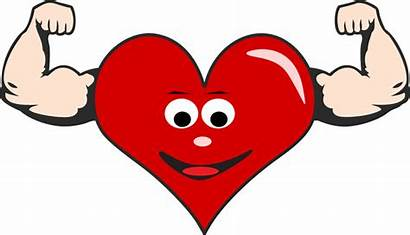 Heart Clipart Health Muscles Cardiovascular Excellent Having