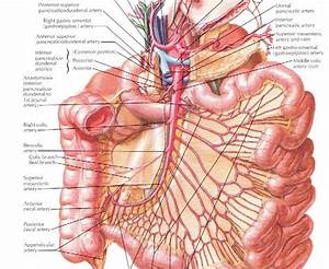 General Surgery Study Notes: Superior Mesenteric Artery ...