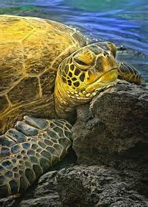 Rock Sea Turtles
