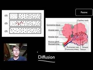 Transport Across Cell Membranes - YouTube