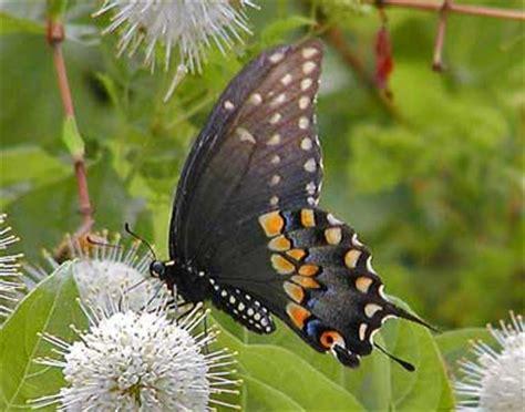butterflies    shipped