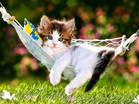 Kitten Backgrounds by Kitten Desktop Wallpaper 60 Images