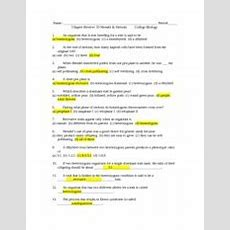 Chapter 10 Study Guide Answer Key  Name Period Chapter Review 10 Mendel Meiosis College Biology