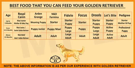 golden retriever  sale price  breed information