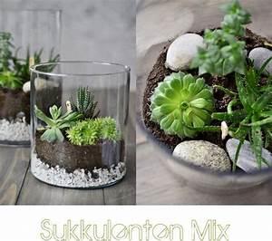 Sukkulenten Im Glas : sukkulenten im glas diy succulents diy nachmachtipp ~ Watch28wear.com Haus und Dekorationen