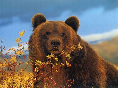 brown bear wallpapers fun animals wiki  pictures