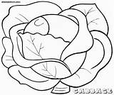 Cabbage Colouring Pages Coloring Dietary Fiber Picolour Food Print sketch template