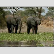 Ein Paradies Für Tiere Afrikas Wildes Herz  The Great