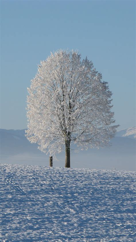 Cell phone wallpapers free download. Winter HD Wallpaper For Your Mobile Phone ...5524