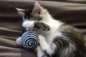 Balle Pour Chat : balle sisal jouet pour chat jouet pour chat ~ Teatrodelosmanantiales.com Idées de Décoration