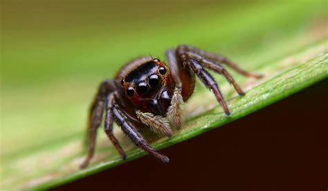 araignee dans la maison probl 232 me d araign 233 es dans la maison a 224 z extermination
