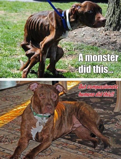 patricks abuser trial  dog blog  travel