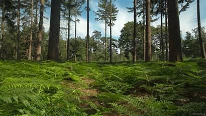 Tanah Hutan Humus Ekogeo Lapisan Bumi Animated