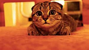 Surprised Wide Eyed GIF - Find & Share on GIPHY