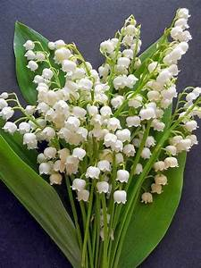 Flower Homes  Lily Of The Valley Flowers