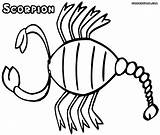 Scorpion Coloring Pages Print Animal sketch template