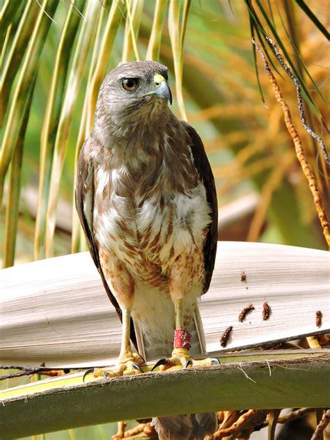 saving  species  perila holistic approach