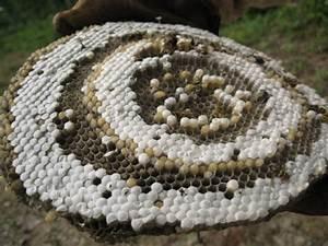 Détruire Un Nid De Guêpes : perles sur le pr sentoir du bijoutier vie pratique ~ Melissatoandfro.com Idées de Décoration