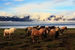 Bilder Von Pferden : island pferde foto bild tiere haustiere pferde esel maultiere bilder auf fotocommunity ~ Frokenaadalensverden.com Haus und Dekorationen