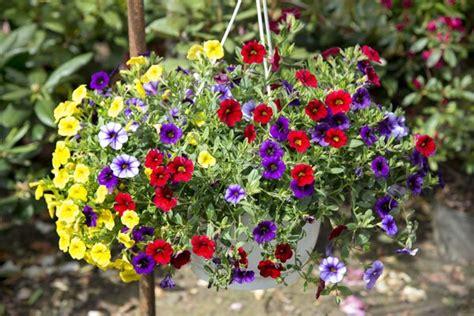 Bildergalerie: Hängeampel Pflanzen Für Die Sonne