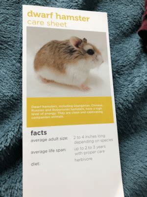 This implies that their activity is at the. Dwarf Hamster Care Sheet Dwarf Hamsters Including Djungarian Chinese Russian and Roborovski ...