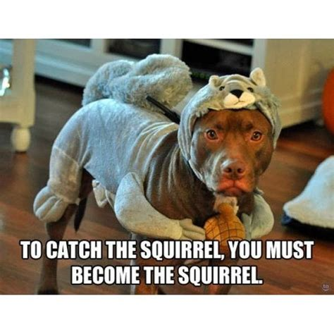 trending current  squirrel squirrels dog dogs
